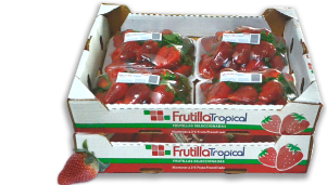 Frutilla Tropical